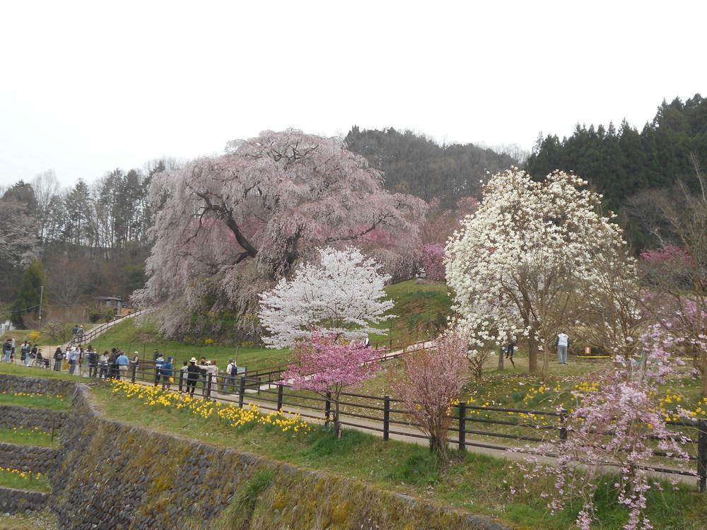 ソロツーリング【桜、サクラ】